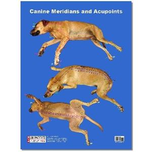 Picture of Canine Acupuncture Meridians Poster (PO03)