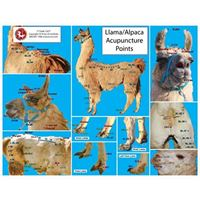 Picture of Llama/Camel Acupoint Chart (CH27)