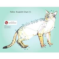 Picture of Feline (Cat) Acupoints Charts (CH28)