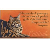 Picture of Dr. Ragona's Canvas-Cattitude (PA39)