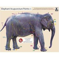 Picture of Elephant Acupoint Chart