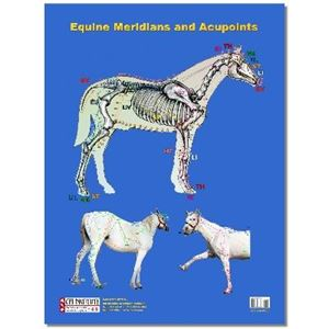 Picture of Poster: Equine Acupuncture Meridians Poster (PO04)